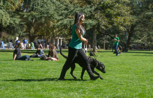 UC Davis student Hannah Chadwick and service dog Spritz walk across the MU quad-March 2014